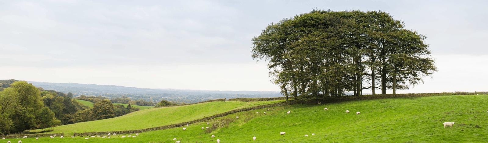 fairboroughs-trees